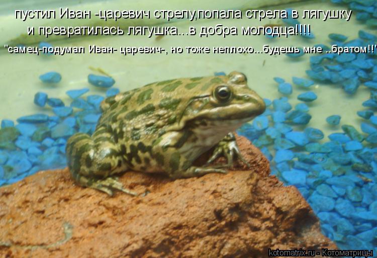 http://kotomatrix.ru/images/lolz/2008/12/25/65.jpg