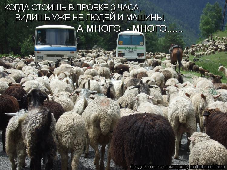 Котоматрица: КОГДА СТОИШЬ В ПРОБКЕ 3 ЧАСА, ВИДИШЬ УЖЕ НЕ ЛЮДЕЙ И МАШИНЫ, А МНОГО  - МНОГО......