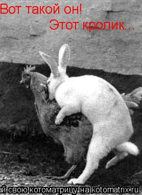 Котоматрица: Вот такой он! Этот кролик...