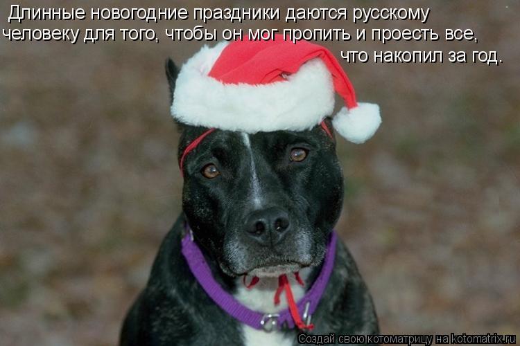 Котоматрица: Длинные новогодние праздники даются русскому  человеку для того, чтобы он мог пропить и проесть все,  что накопил за год.