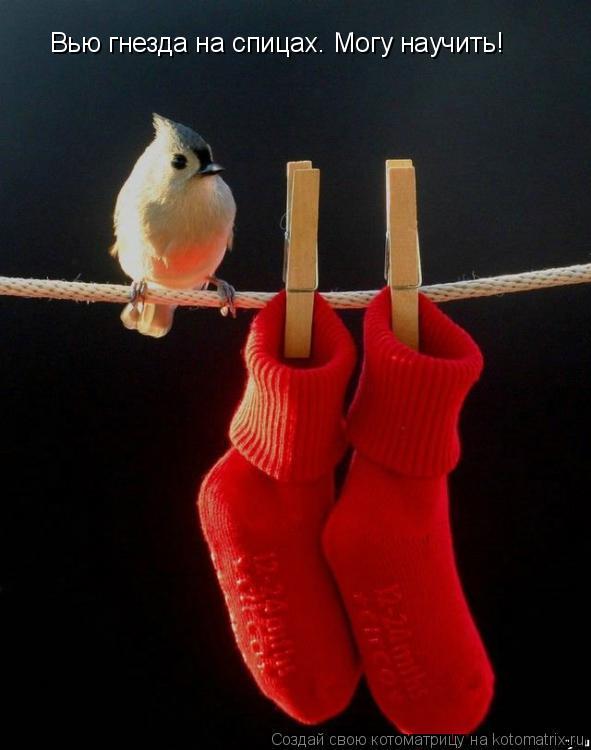 Котоматрица: Вью гнезда на спицах. Могу научить!