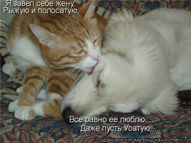 Котоматрица: Я завел себе жену, Рыжую и полосатую, Все равно ее люблю.... Даже пусть Усатую.....
