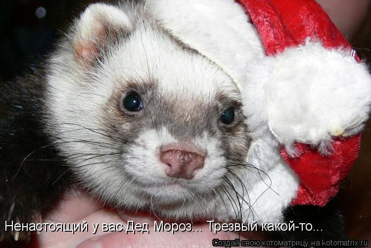 Котоматрица: Ненастоящий у вас Дед Мороз... Трезвый какой-то...