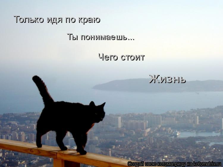 Котоматрица: Только идя по краю Ты понимаешь... Чего стоит  Жизнь