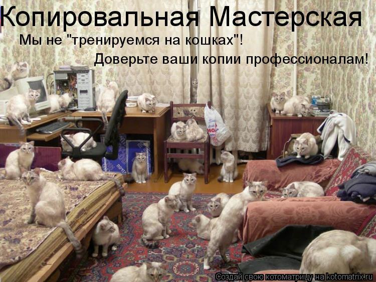 """Котоматрица: Копировальная Мастерская Мы не """"тренируемся на кошках""""!  Доверьте ваши копии профессионалам!"""