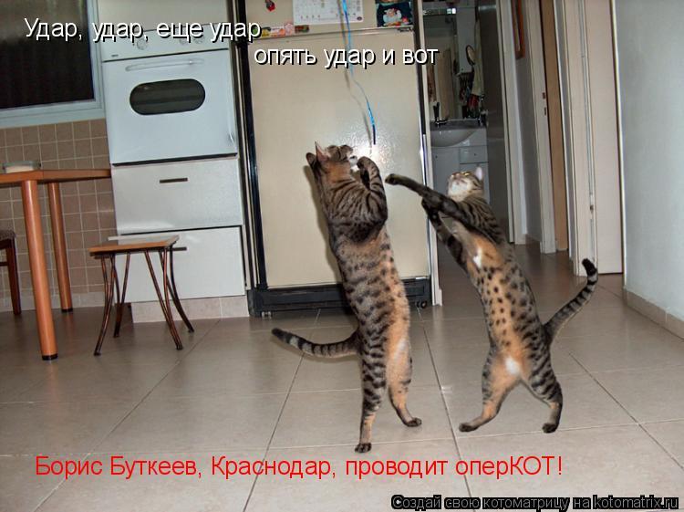 Котоматрица: Удар, удар, еще удар опять удар и вот Борис Буткеев, Краснодар, проводит оперКОТ!