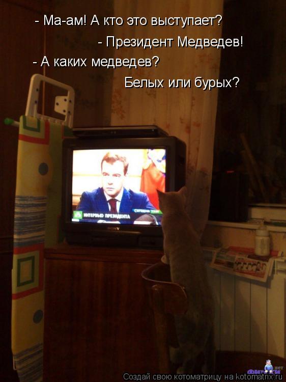 Котоматрица: - Ма-ам! А кто это выступает? - Президент Медведев! - А каких медведев? Белых или бурых?