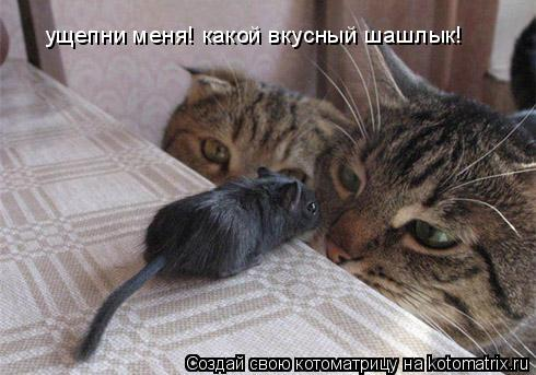 Котоматрица: ущепни меня! какой вкусный шашлык!