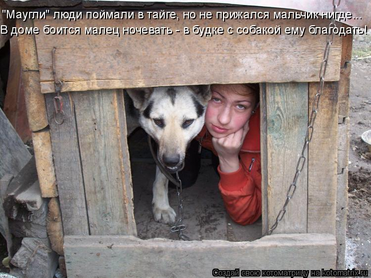 """Котоматрица: """"Маугли"""" люди поймали в тайге, но не прижался мальчик нигде... В доме боится малец ночевать - в будке с собакой ему благодать!"""