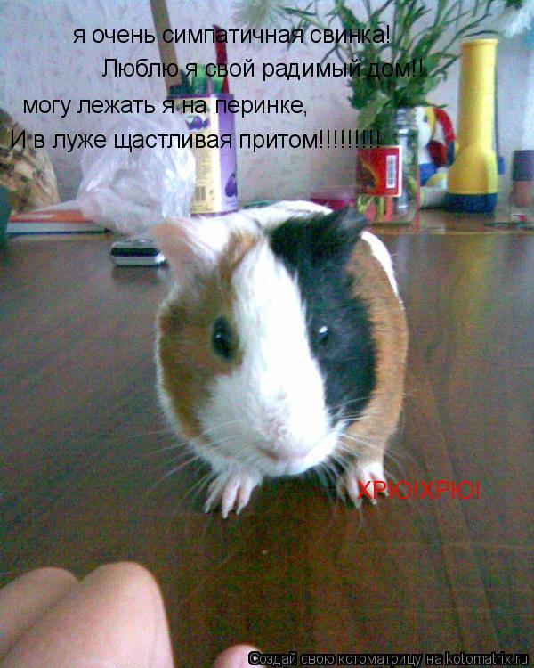 Котоматрица: я очень симпатичная свинка! Люблю я свой радимый дом!! могу лежать я на перинке, И в луже щастливая притом!!!!!!!!! ХРЮ!ХРЮ!