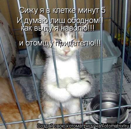 Котоматрица: Сижу я в клетке минут 5  И думаю лиш ободном!! как выду я наволю!!! и отомщу придателю!!!