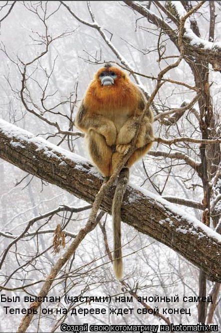 Котоматрица: Был выслан (частями) нам знойный самец Теперь он на дереве ждет свой конец