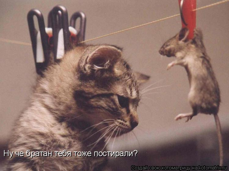 http://kotomatrix.ru/images/lolz/2008/12/27/3.jpg