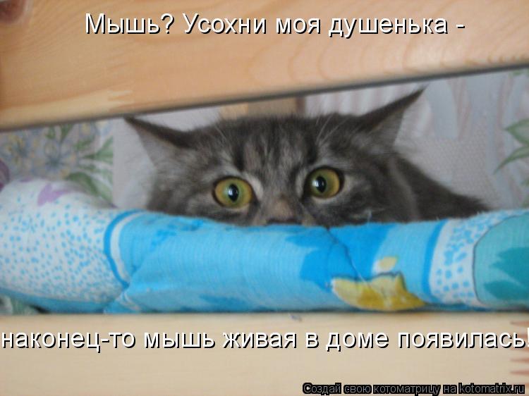 Котоматрица: Мышь? Усохни моя душенька -  наконец-то мышь живая в доме появилась!
