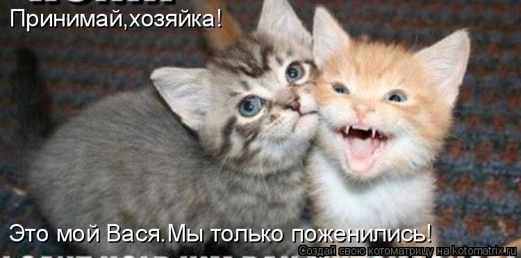 Котоматрица: Принимай,хозяйка! Это мой Вася.Мы только поженились!