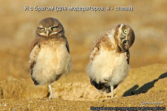 Котоматрица: Одноклассники Я с братом (для модераторов, я - слева)