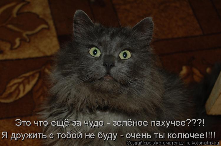 Котоматрица: Я дружить с тобой не буду - очень ты колючее!!!! Это что ещё за чудо - зелёное пахучее???!