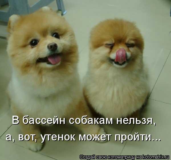 Котоматрица: В бассейн собакам нельзя, а, вот, утенок может пройти...