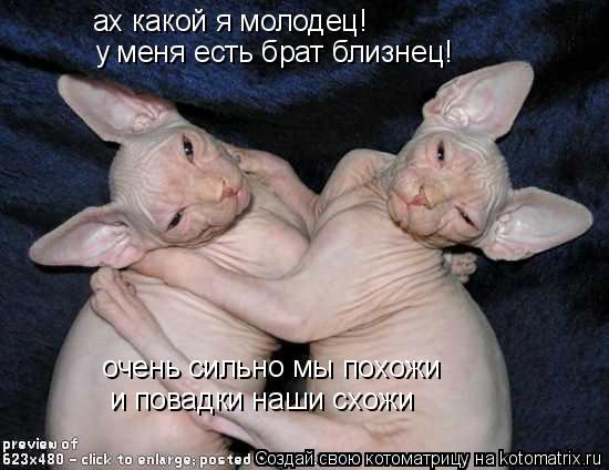 Котоматрица: ах какой я молодец! у меня есть брат близнец! очень сильно мы похожи и повадки наши схожи