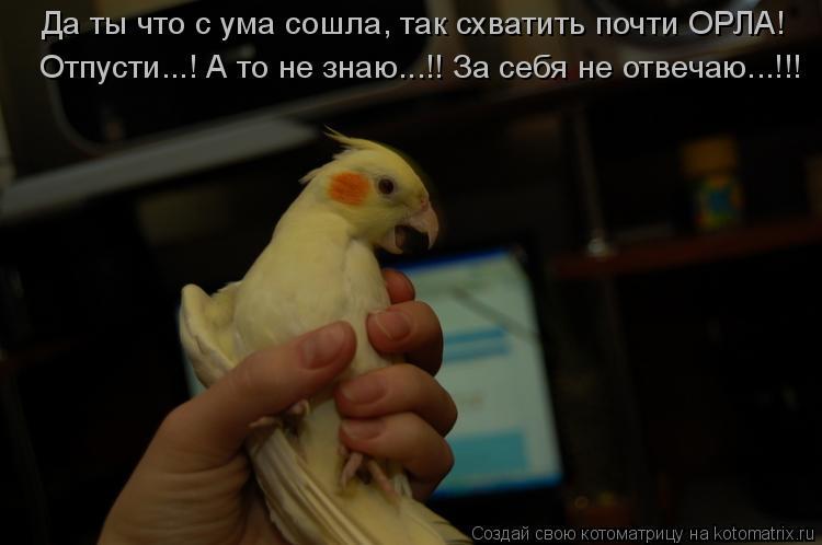 Котоматрица: Да ты что с ума сошла, так схватить почти ОРЛА! Отпусти...! А то не знаю...!! За себя не отвечаю...!!!
