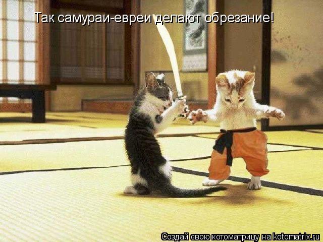 Котоматрица: Так самураи-евреи делают обрезание!