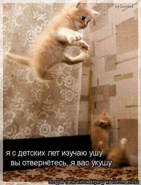http://kotomatrix.ru/images/lolz/2008/12/29/_t.jpg