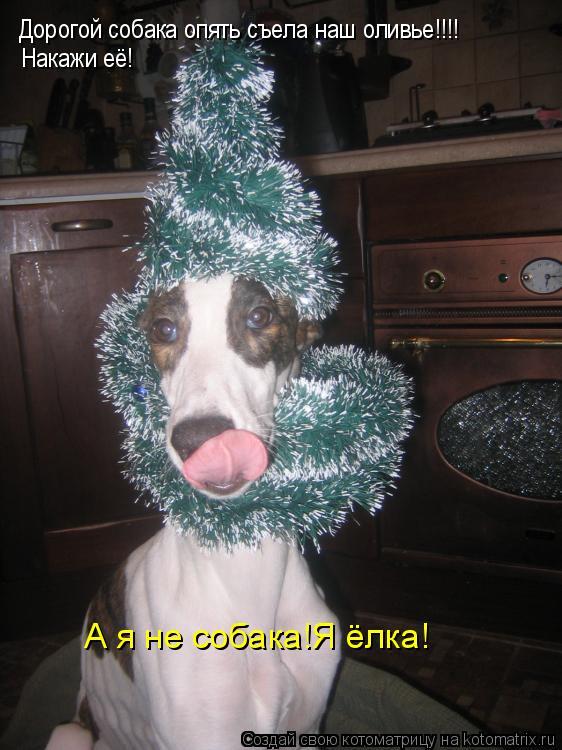 Котоматрица: Дорогой собака опять съела наш оливье!!!! Накажи её! А я не собака!Я ёлка!