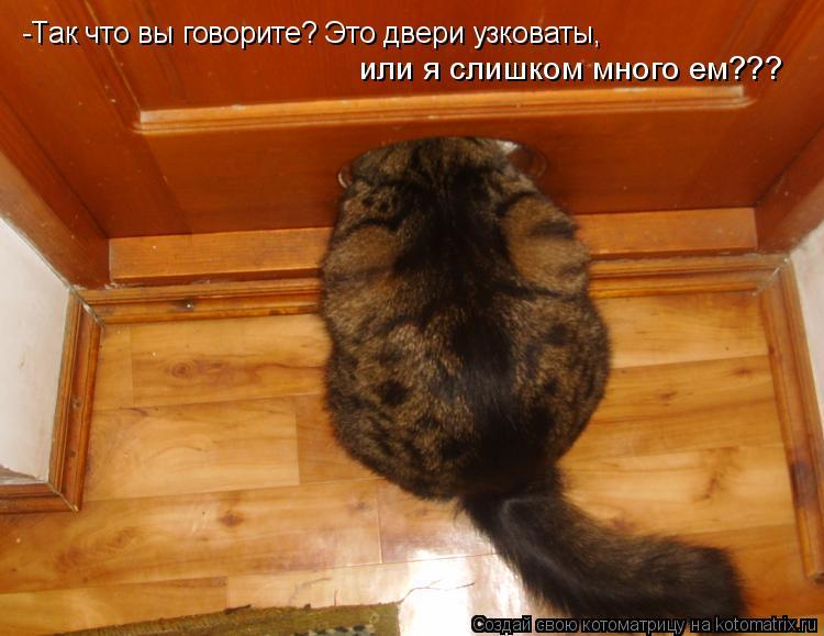 Котоматрица: -Так что вы говорите? Это двери узковаты,  или я слишком много ем???