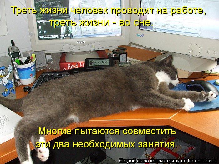 Котоматрица: Треть жизни человек проводит на работе, треть жизни - во сне. Многие пытаются совместить  эти два необходимых занятия.