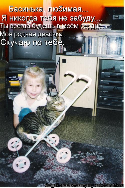 Котоматрица: Басинька, любимая...  Я никогда тебя не забуду.... Ты всегда будешь в моём сердце... Моя родная девочка.. Скучаю по тебе..