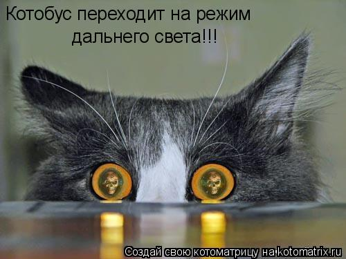 Котоматрица: Котобус переходит на режим  дальнего света!!!