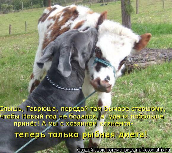 Котоматрица: Слышь, Гаврюша, передай там Бычаре старшому,  чтобы Новый год не бодался, а  удачи побольше  принёс! А мы с хозяином клянемся- теперь только ры