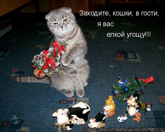 Котоматрица: Заходите, кошки, в гости, я вас  елкой угощу!!!