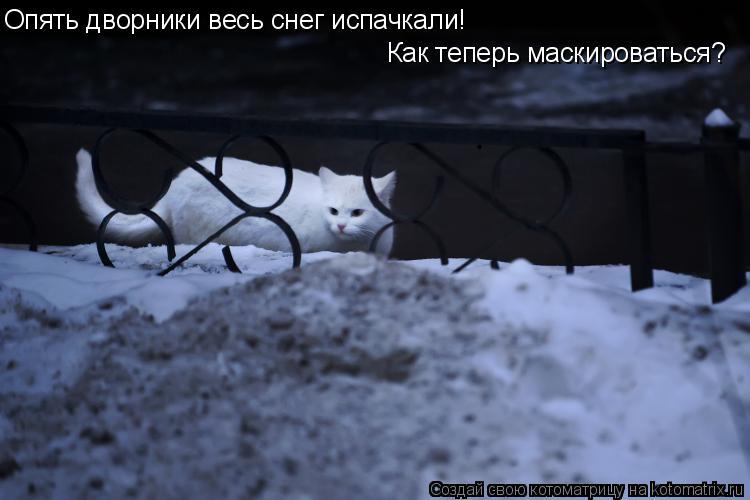 Котоматрица: Опять дворники весь снег испачкали! Как теперь маскироваться? Опять дворники весь снег испачкали!  Как теперь маскироваться?