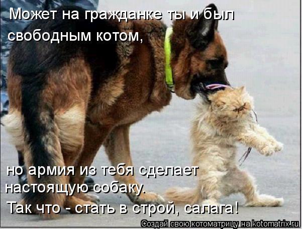 Котоматрица: Может на гражданке ты и был свободным котом, но армия из тебя сделает настоящую собаку. Так что - стать в строй, салага!