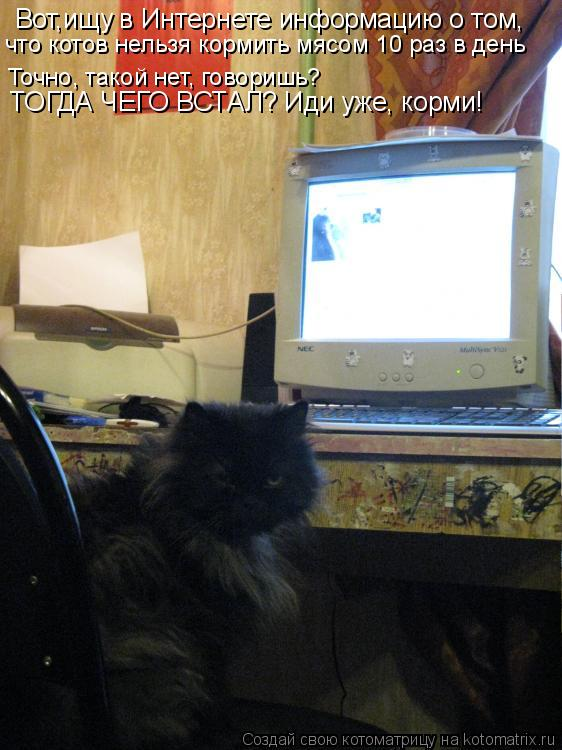 Котоматрица: Вот,ищу в Интернете информацию о том,  что котов нельзя кормить мясом 10 раз в день Точно, такой нет, говоришь? ТОГДА ЧЕГО ВСТАЛ? Иди уже, корми!