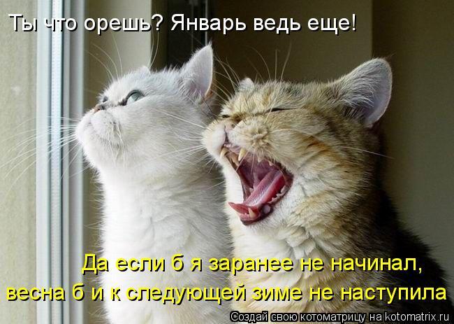 Котоматрица: Ты что орешь? Январь ведь еще! Да если б я заранее не начинал, весна б и к следующей зиме не наступила