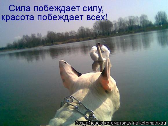 Котоматрица: Сила побеждает силу,  красота побеждает всех!