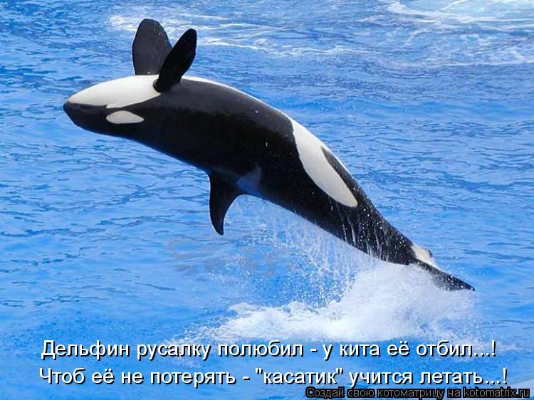 """Котоматрица: Дельфин русалку полюбил - у кита её отбил...! Чтоб её не потерять - """"касатик"""" учится летать...!"""