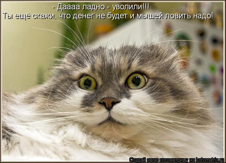 Котоматрица: - Даааа ладно - уволили!!!  Ты ещё скажи, что денег не будет и мышей ловить надо!