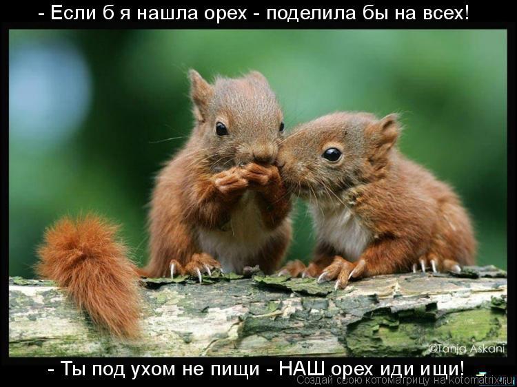 Котоматрица: - Если б я нашла орех - поделила бы на всех! - Ты под ухом не пищи - НАШ орех иди ищи!