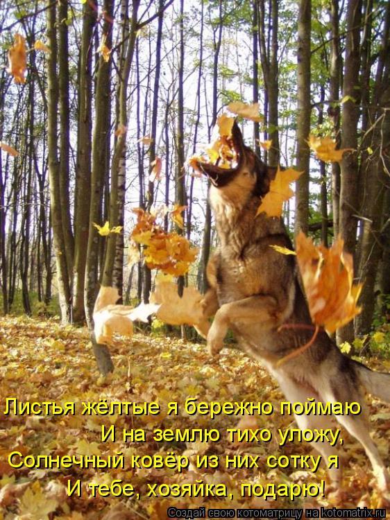 Котоматрица: И на землю тихо уложу, Солнечный ковёр из них сотку я И тебе, хозяйка, подарю! Листья жёлтые я бережно поймаю