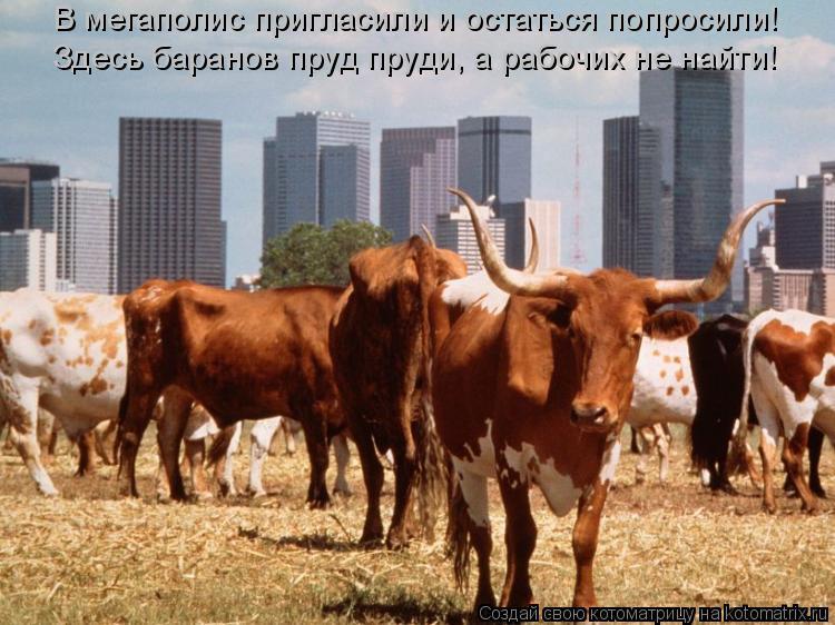 Котоматрица: В мегаполис пригласили и остаться попросили! Здесь баранов пруд пруди, а рабочих не найти!