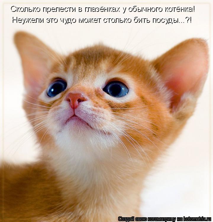 Котоматрица: Сколько прелести в глазёнках у обычного котёнка! Неужели это чудо может столько бить посуды...?!