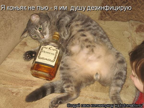 Котоматрица: Я коньяк не пью - я им  душу дезинфицирую