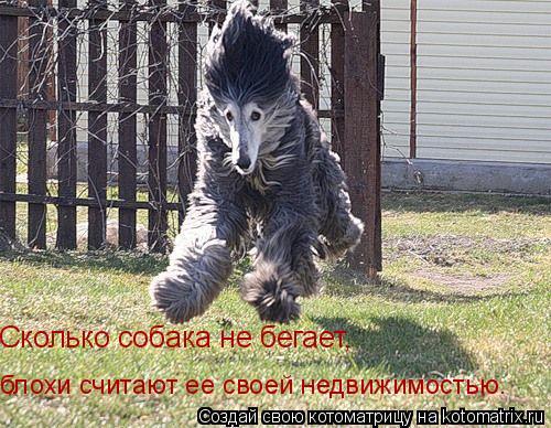 Котоматрица: Сколько собака не бегает, блохи считают ее своей недвижимостью.