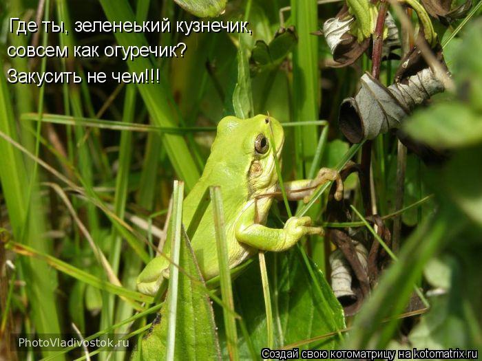 Котоматрица: Где ты, зеленеький кузнечик, совсем как огуречик? Закусить не чем!!!