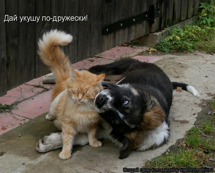 Котоматрица: Дай укушу по-дружески!