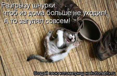 Котоматрица: Разгрызу шнурки,  чтоб из дома больше не уходил! А то загулял совсем!