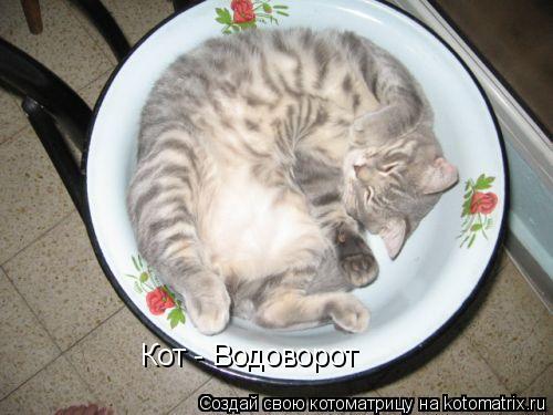 Кот водоворот
